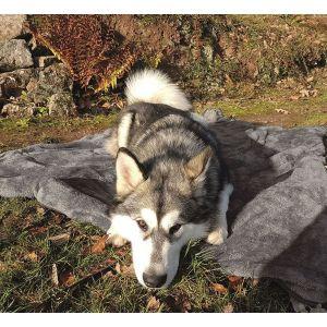 Henry Wag Multimat Travel Throw Dog Rug - Grey