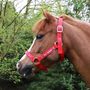 Hy Equestrian Christmas Merry Christmas Head Collar & Lead Rope