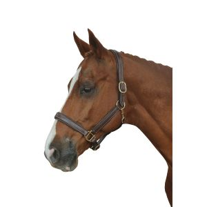 Collegiate Padded Leather Headcollar