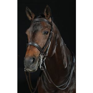 Collegiate Raised Weymouth Bridle