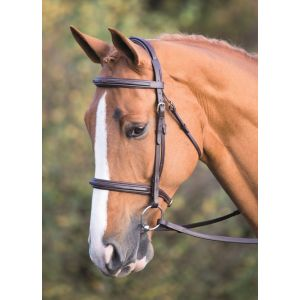 Shires Salisbury Fairford Bridle