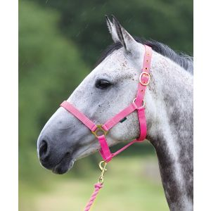 Wessex HeadCollar with Lead Rope