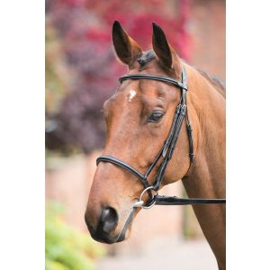 Shires Rossano Raised Cavesson Bridle