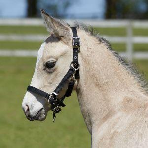 Bitz Fully Adjustable Foal Slip - Black