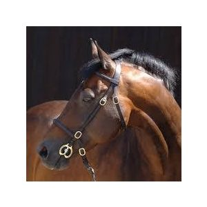 Caldene In Hand Bridle with Lead Rein - Full Size
