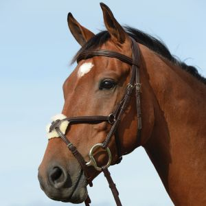 Collegiate Syntovia+ Padded Raised Grackle Bridle