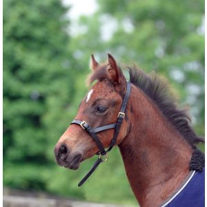 Cottage Craft Leather Foal Slip