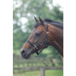 Cottage Craft Standard Headcollar