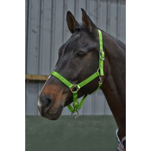 Whitaker Alex Everyday Headcollar