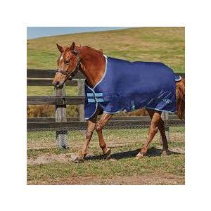 Saxon 600 Standard Neck Lite - Pony