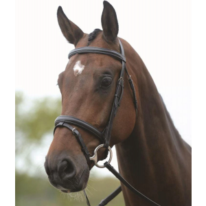 Kincade Flash Bridle II