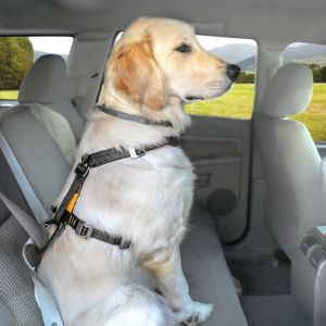 Kurgo Tru-Fit Smart Harness With Seatbelt Tether