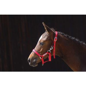 Cottage Craft Turnout-Safe Foal Headcollar