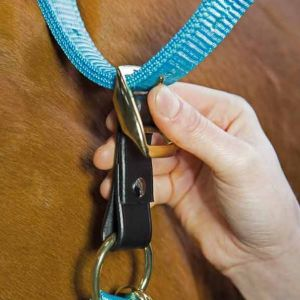 Shires Aviemore Headcollar Breakaway Attachment - 3/4