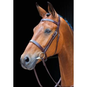 Shires Salisbury Berrington Bridle