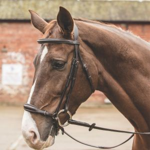 Mark Todd Drop Noseband German Bridle