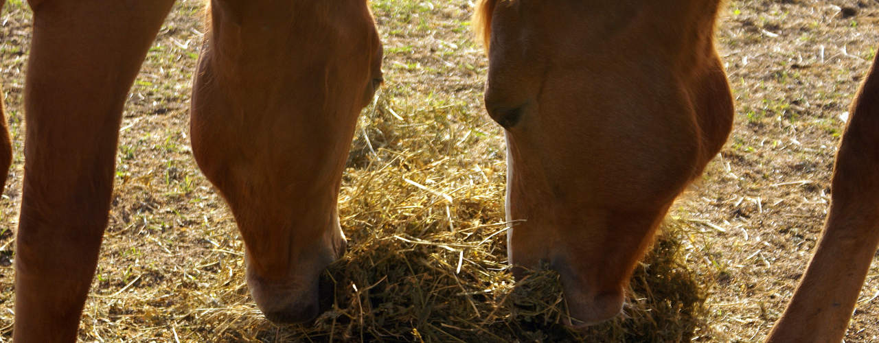 How to feed forage during the winter months