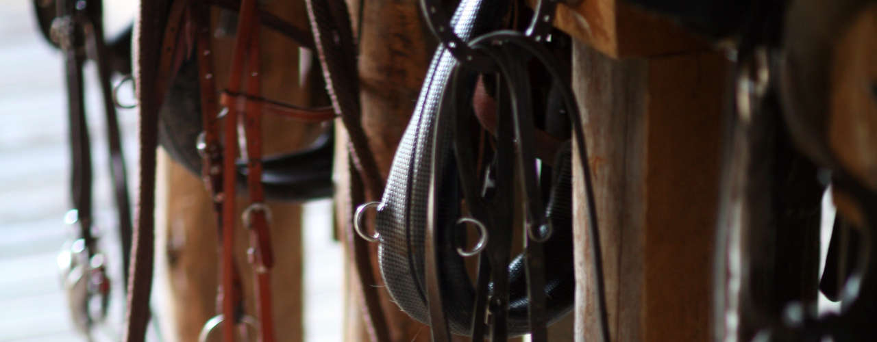 Top 5 tips for storing your tack