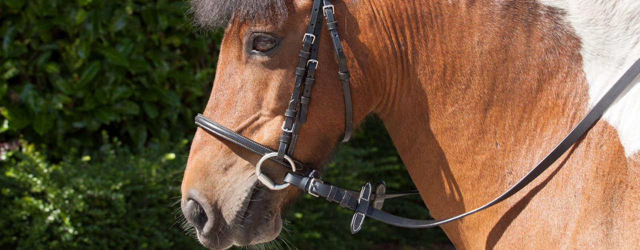 How to choose the perfect bit for your horse